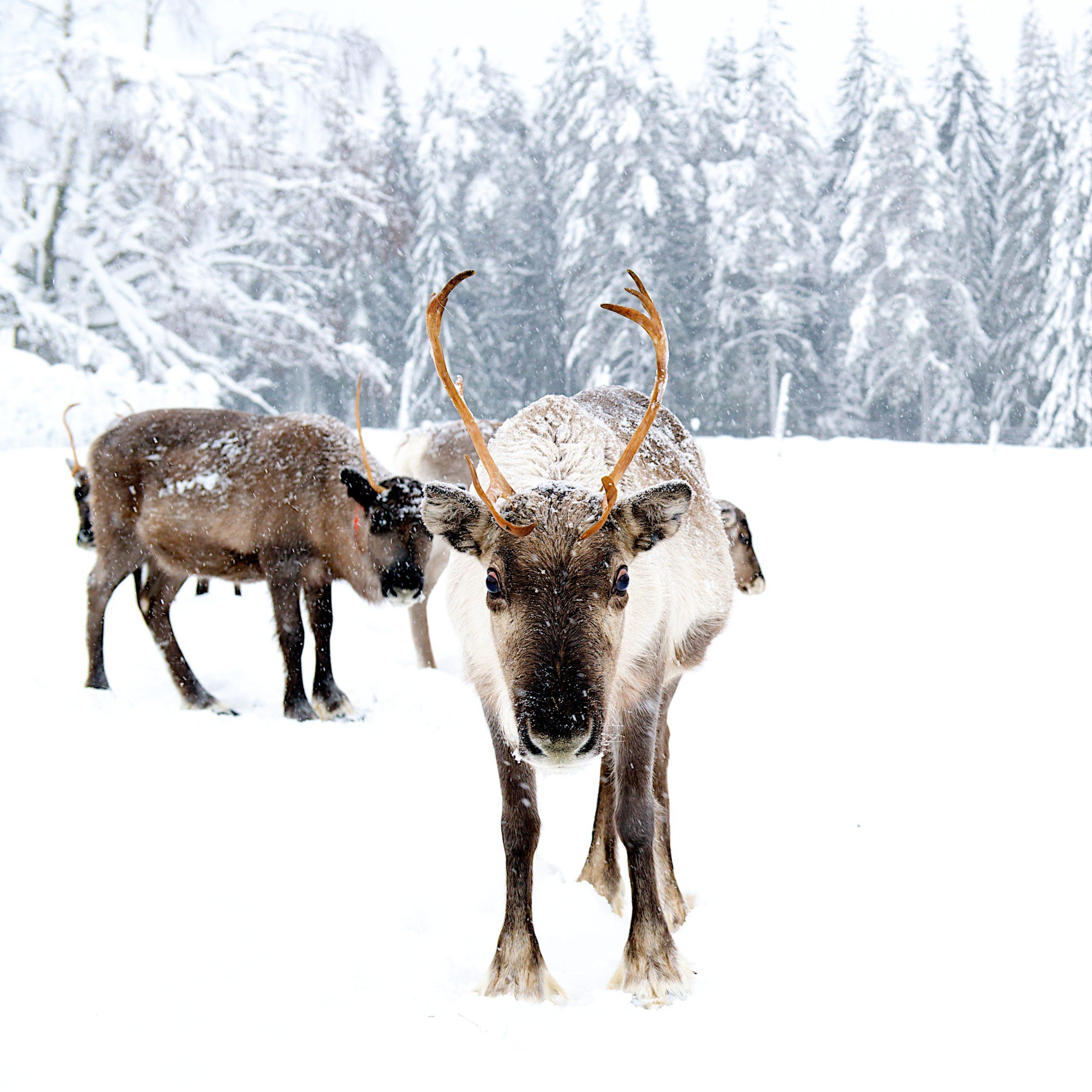 2021_Schwedisch Lappland 8